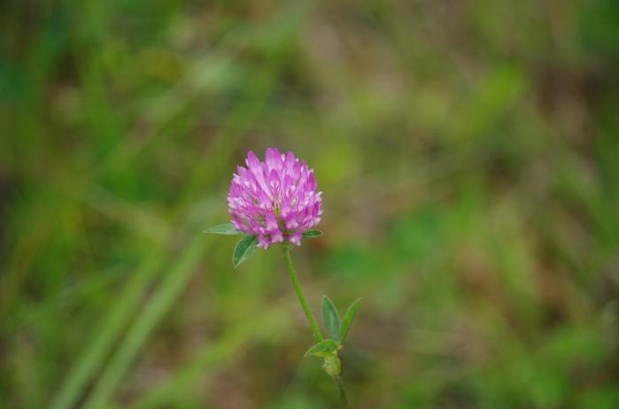 blom 4